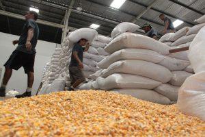 Conab abre três unidades satélites para venda de milho a pequenos criadores no Ceará