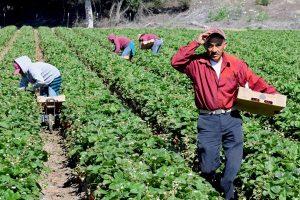 Governo do Ceará lança projeto Agro + Produtor Rural