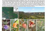 Riqueza da flora do Araripe publicada no guia do Museu Field de História Natural, em Chicago, nos EUA