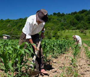 agricultura familiar FOTO DIVULGAÇÃO