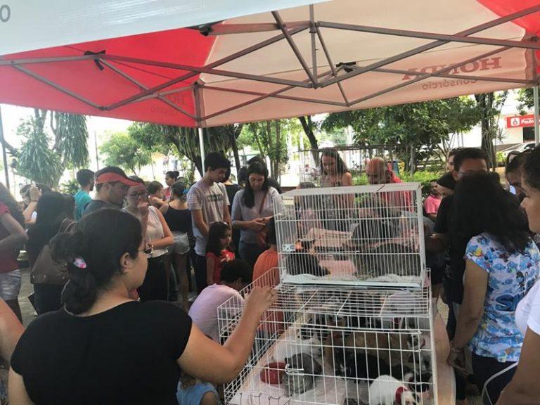 Em Crato, feira de adoção de animais reúne famílias e parceiros na Praça Alexandre Arraes
