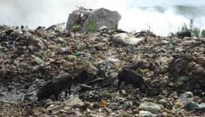 MPCE entra com ação de improbidade contra prefeito de Iguatu por lixão irregular