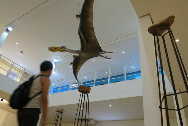 Semana dos Museus com programação especial no Museu de Paleontologia Plácido Cidade Nuvens