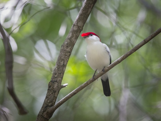 Lista Vermelha vai relacionar a fauna ameaçada do Ceará