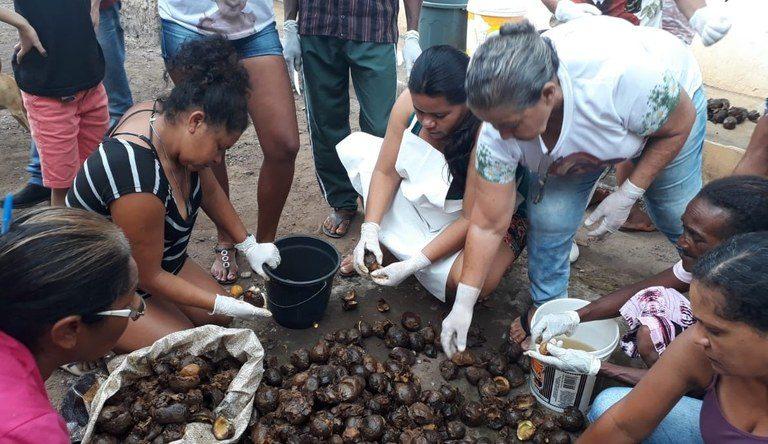 Em Crato, comunidade recebe curso de produção de mudas de pequi - Foto_Graça Duarte