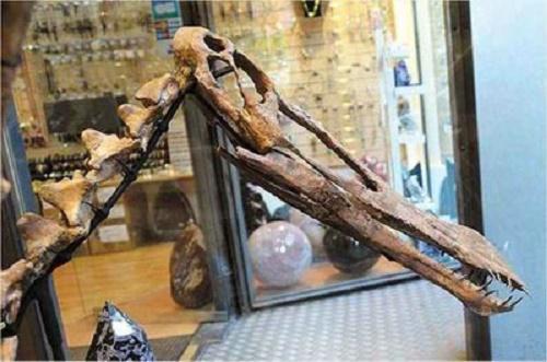 Material recuperado inclui espécies que viveram há milhões de anos no Brasil e está avaliado em mais de R$ 2,5 milhões