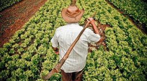 agriculturafamiliarmundodoagronegocio