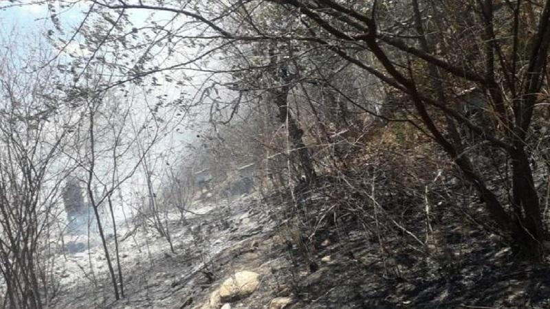 Incêndio provoca destruição e medo no distrito de Calabaça, em Várzea Alegre Foto Reprodução _Internet