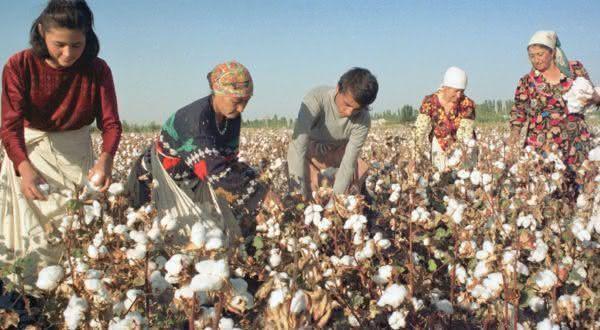 produtores de algodão Foto Internet
