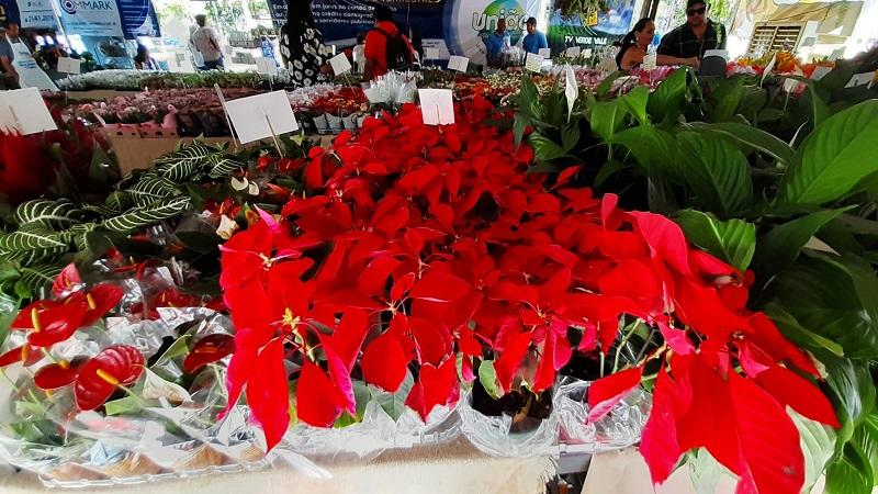 Fest Flores de Holambra Cariri (6)