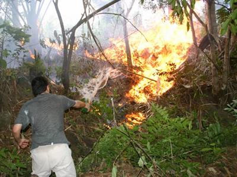 incêndio na Floresta Nacional do Araripe Foto Ciro Albano Divulgação