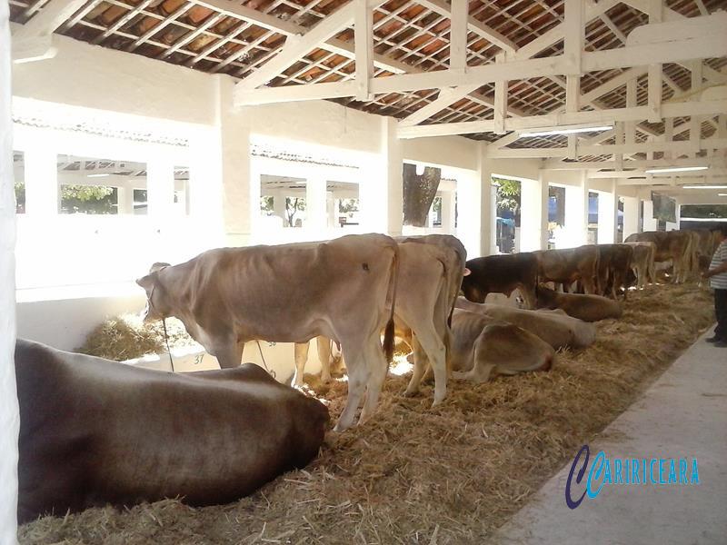 feiras e exposições agropecuárias. Foto Jota Lopes. Agência Caririceara.com