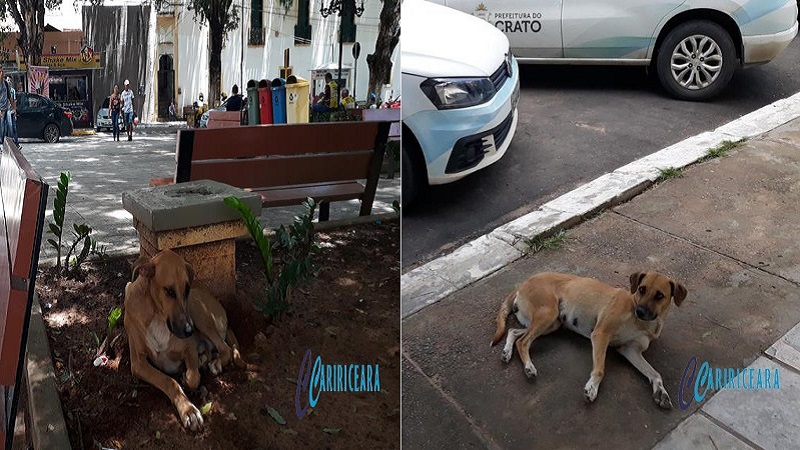 Cachorro soltos nas ruas de Crato. Foto Jota Lopes_Agência Caririceara.com