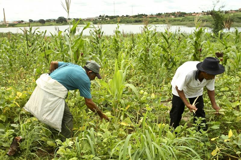 Produção Agricola no Ceará - Foto Tatiana Fortes DIVULGAÇÃO