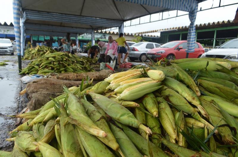 milho verde - Foto Portal Infonet DIVULGAÇÃO