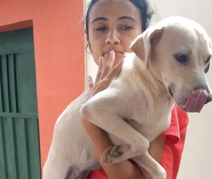 """Barbalha castra mais de 50 animais de rua com o projeto """"Amigo do Homem"""""""