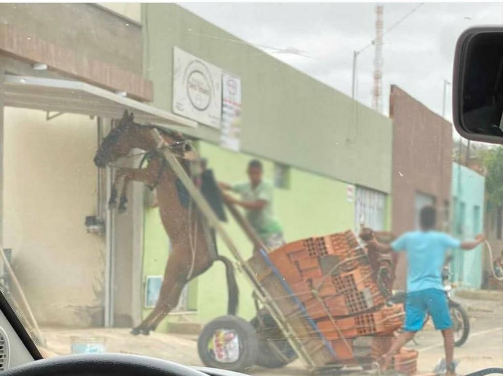 Burro fica suspenso em carroça com excesso de peso no Bairro Salesianos, em Juazeiro do Norte. — Foto Divulgação