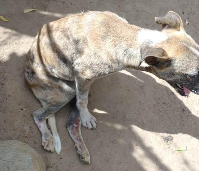 Cachorra atropelada em Assaré. Suspeito acabou preso e confessou o crime. 29.07.2021 Foto: Polícia Civil do Ceará/Divulgação